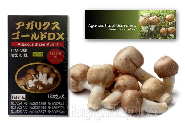 Công dụng nấm Agaricus Blazei Murill