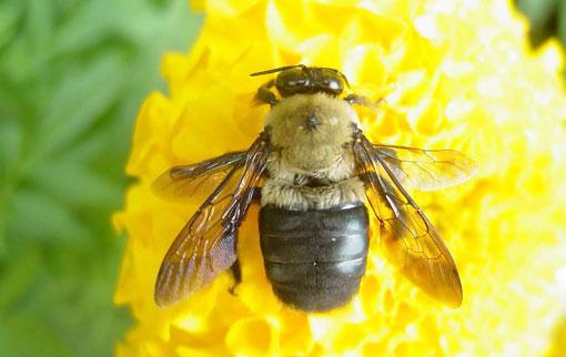 suaongCông dụng từ Sữa ong chúa pháp trong việc làm đẹp