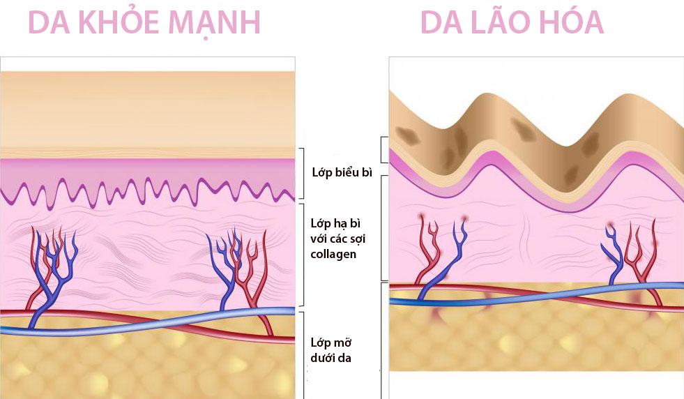 collagen-la-gi(1)